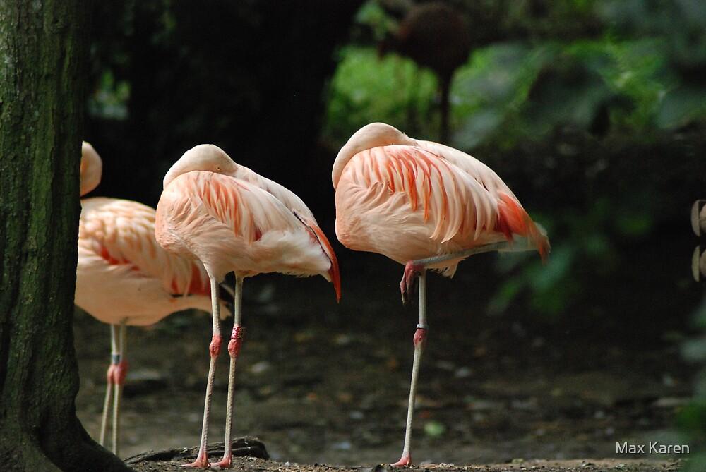 Flamingo by Max Karen