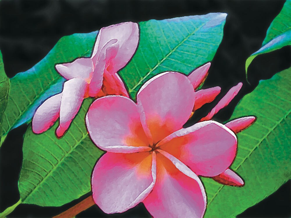 Plumeria by THConway