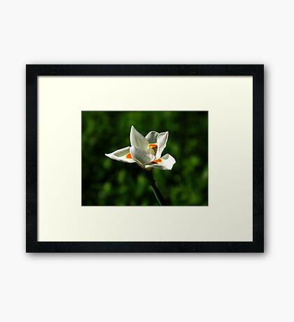 Untitled 46 Framed Print