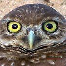 Burrowing Owl #7 by Virginia N. Fred