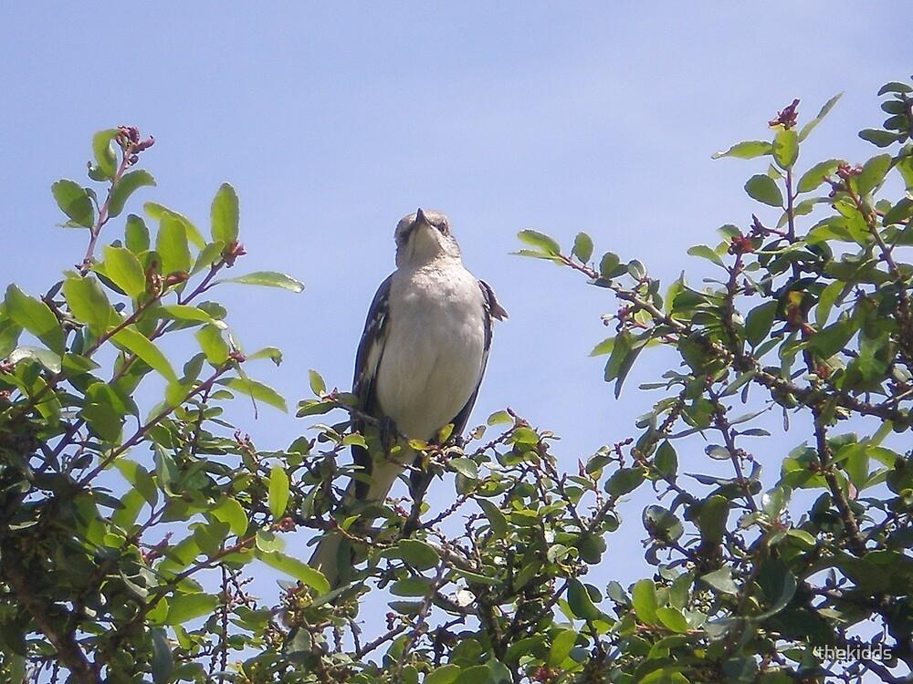Mockingbird by thekidds