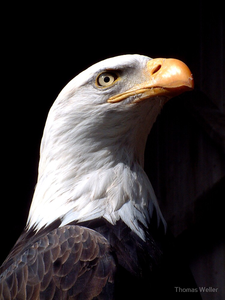 Eagle Profile by Thomas Weller