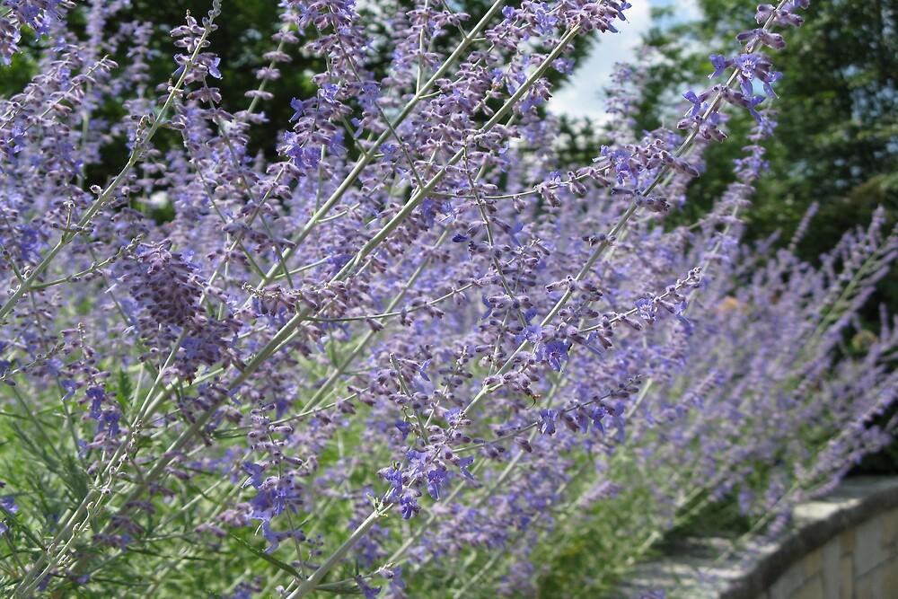 Purple Flowers by LilyPearl0560