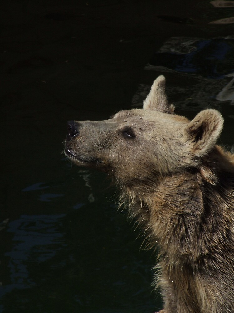 bear by Flavia Di segni