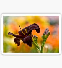 """Root Beer"" Daylily Sticker"