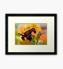 """Root Beer"" Daylily Framed Print"