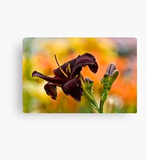 """Root Beer"" Daylily Canvas Print"