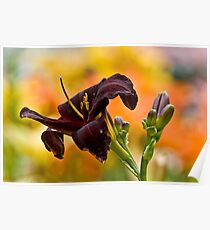 """""""Root Beer"""" Daylily Poster"""