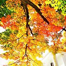 from under the shade tree in autumn by Beth Brightman