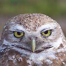 Burrowing Owl #9 by Virginia N. Fred