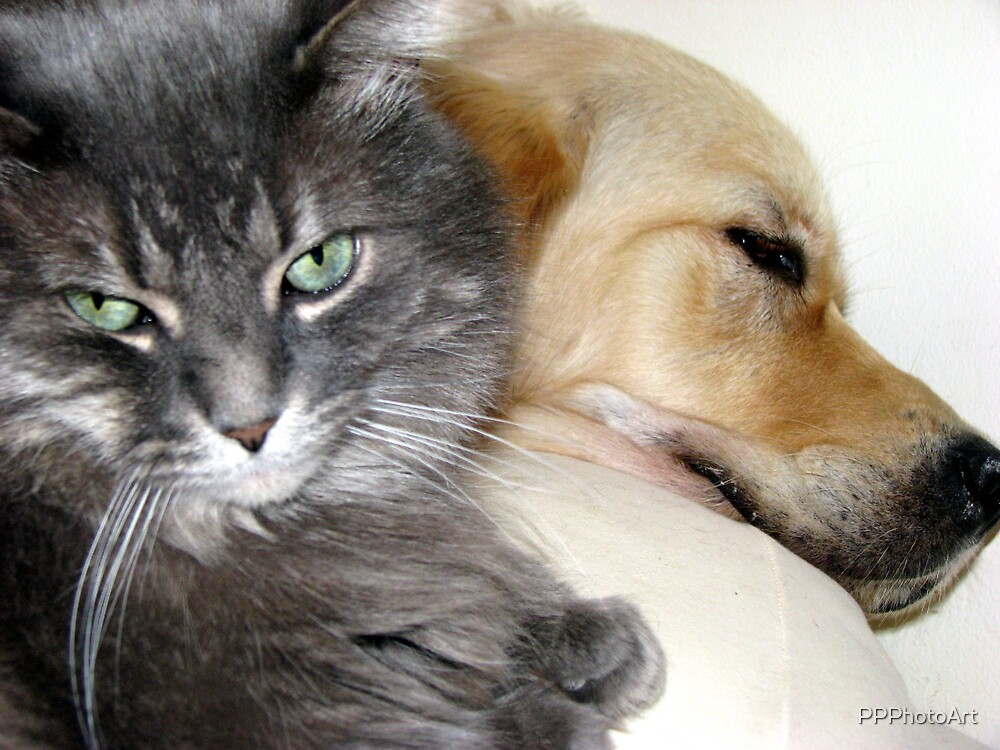 Shared Pillow by PPPhotoArt