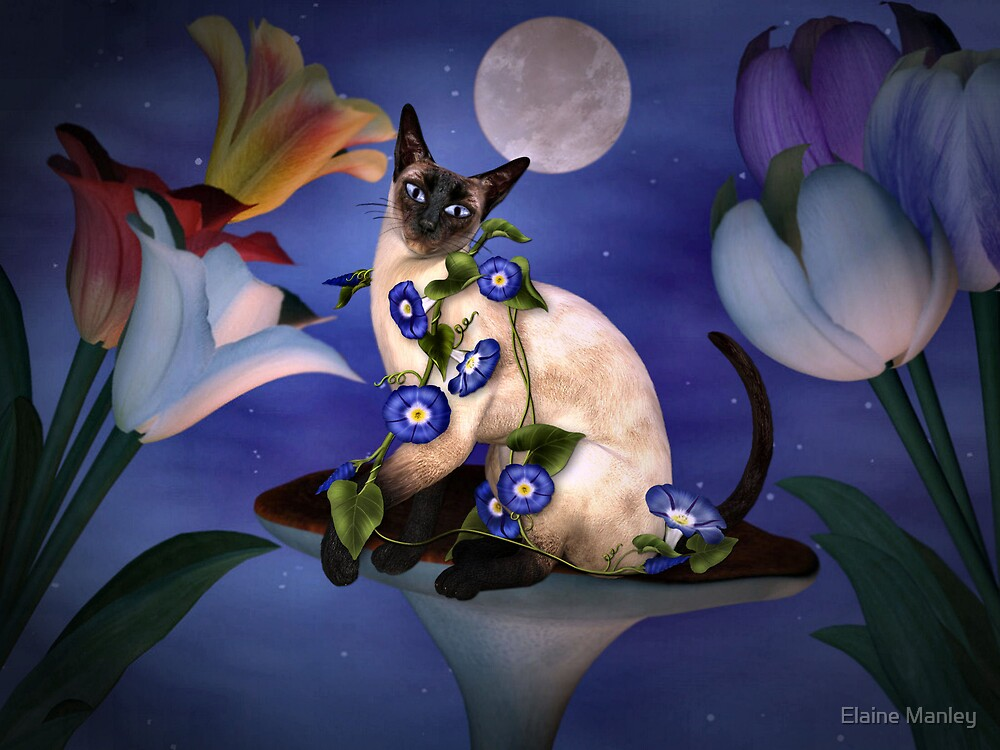 Siamese Moonlight  by Elaine  Manley