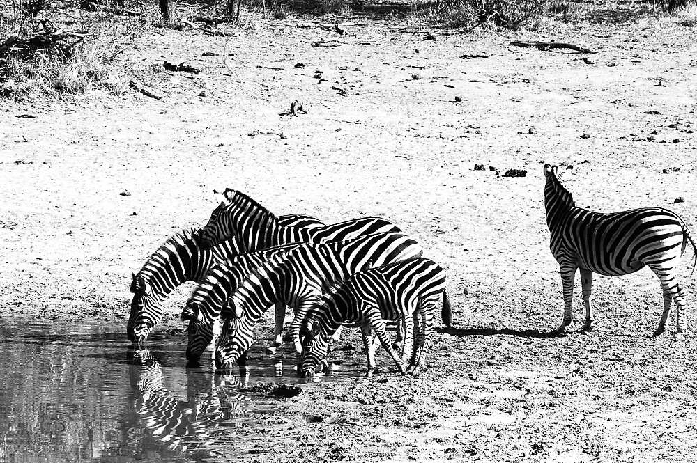 At the Waterhole I by Lauraloz