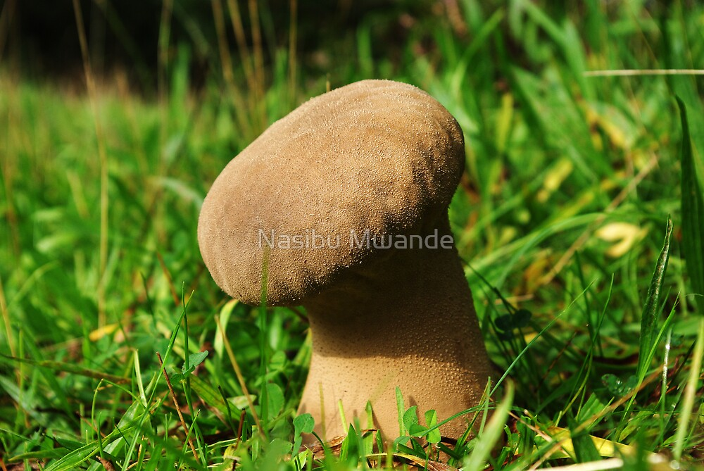 Fungus! Make no mistake by Nasibu Mwande