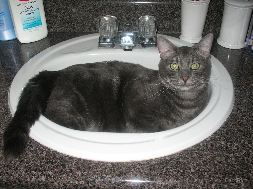 The Cat's Tub by CassPics