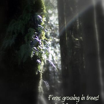 snowy Oregon ferns in trees 3 with haiku by PoemsProseArt