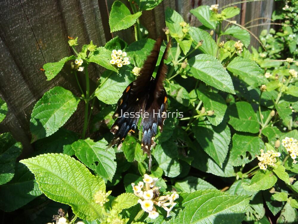 Flutter by Jessie Harris