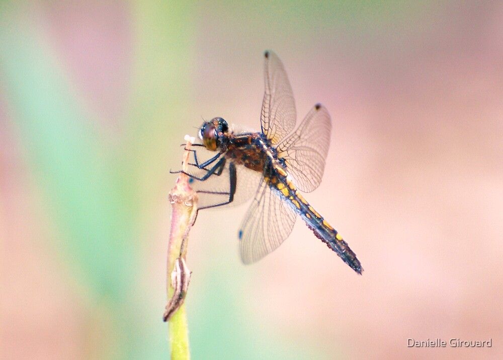 Dragonfly at work by Danielle Girouard