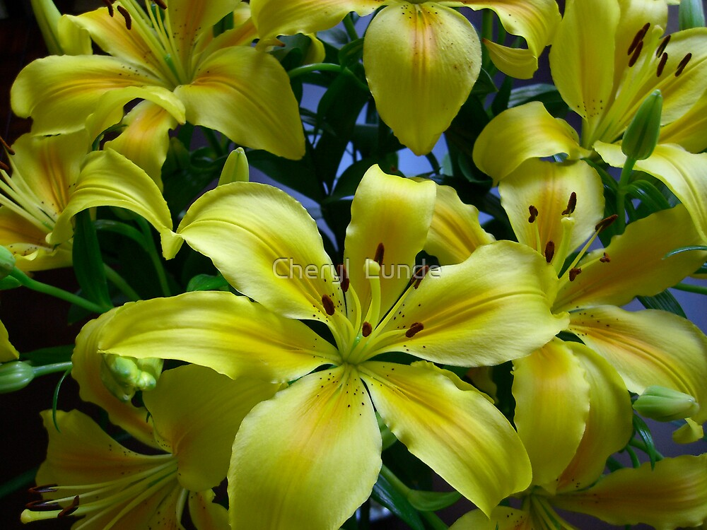 Sunlit Lilies by Cheryl  Lunde