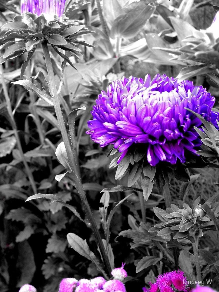 Pretty in Purple. by Lindsey W