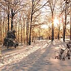 GOLDEN WINTER MORN 1 by NatureGreeting Cards ©ccwri