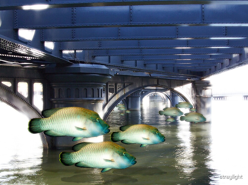 Fish Dream by straylight