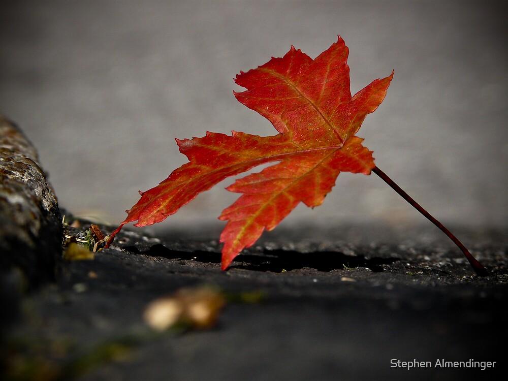 Red Leaf by Stephen Almendinger