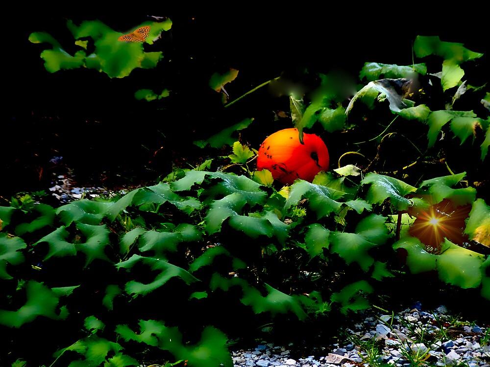 The Pumpkin Patch by Judi Taylor