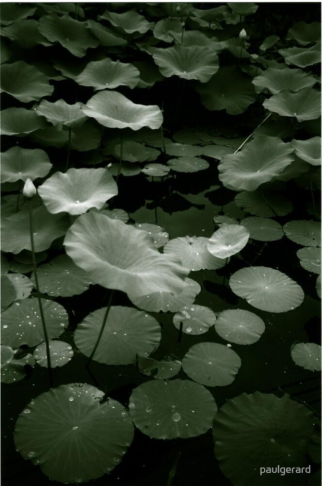 Lotus Near You by paulgerard
