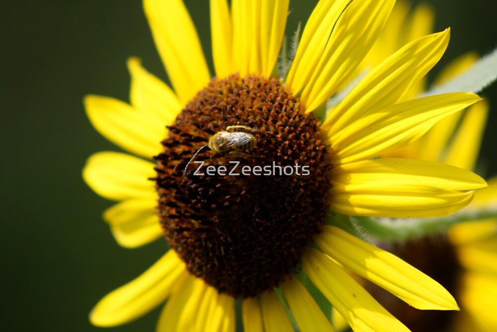 A Bee visiting the Sunflower by ZeeZeeshots