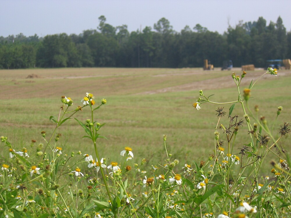 Wildflowers near the hay by Amanda  Burns