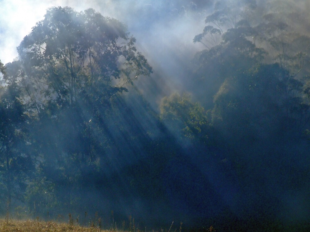 Mist Rays by wombat23