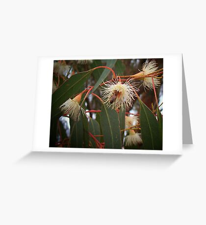 Bee In Gum Tree. Greeting Card