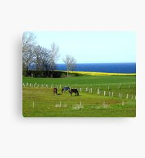 Another spring memory from the Baltic Sea Canvas Print