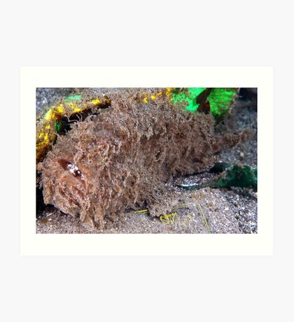 Hairy Frogfish Art Print