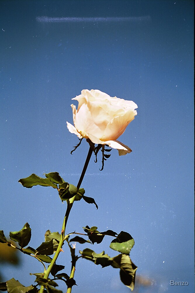 Rose against the sky by Benzo