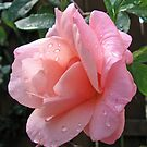 Verträumte Rose von BlueMoonRose