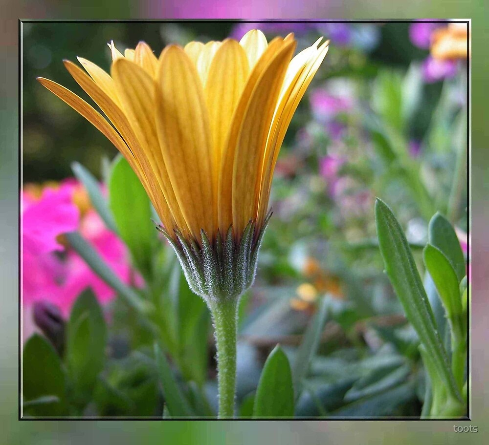Colors of spring by toots