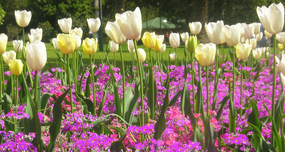 Tulips and Violet by Melissa Park