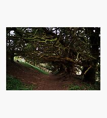 Compton Wood Photographic Print