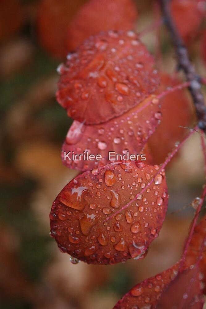 Dew drops by Kirrilee  Enders