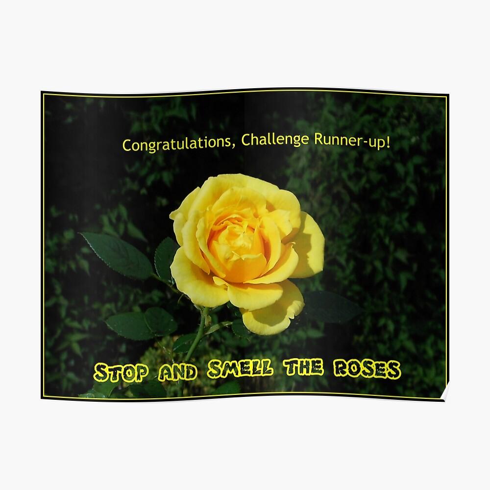 Stoppen Sie und riechen Sie die Rosen - Challenge Runner-up Banner Poster