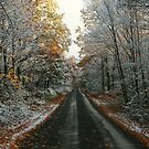 SNOWY AUTUMN LEAVES (GREENLAND ROAD) by Lori Deiter