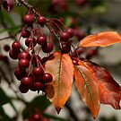 Fall in Pennsylvania - Berries & Leaves by Lori Deiter
