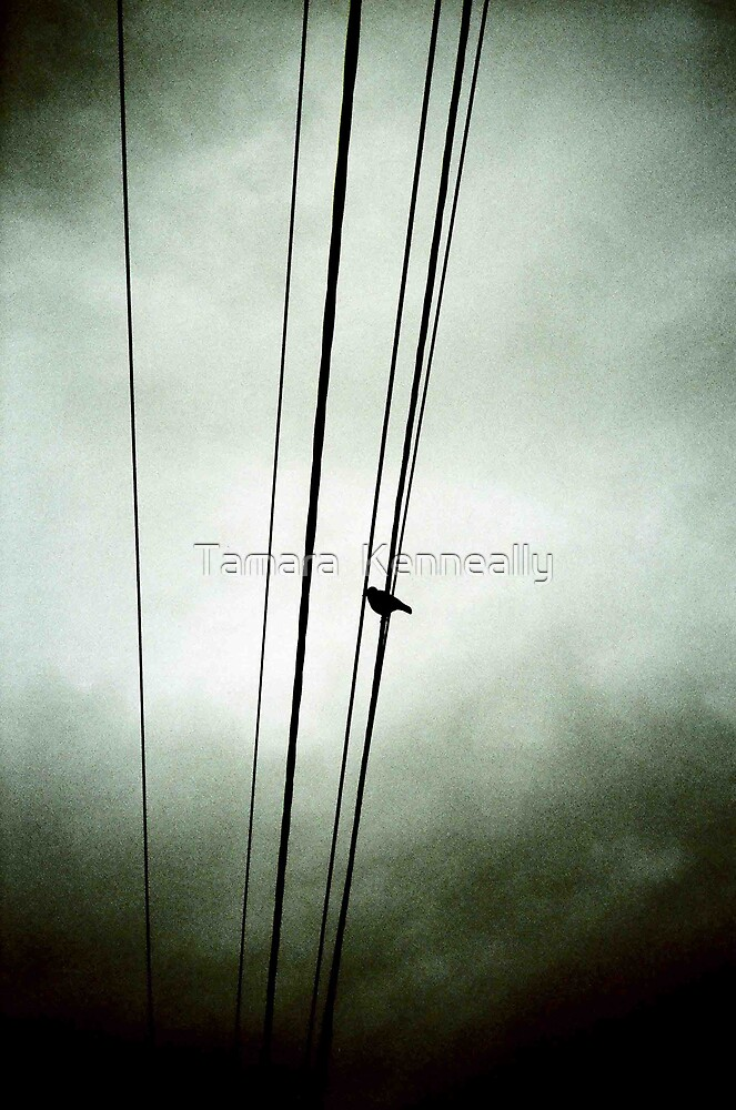 On A Wire by Tamara  Kenneally