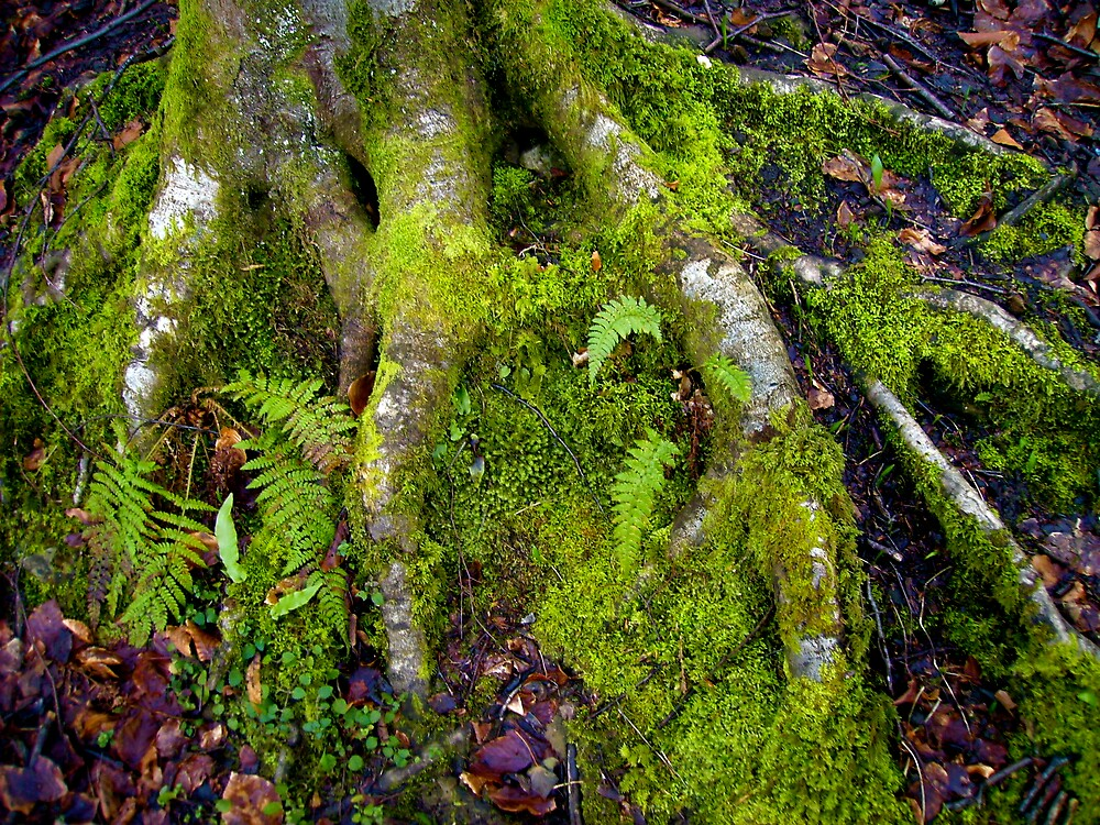 Rooted 1 by Amanda Gazidis