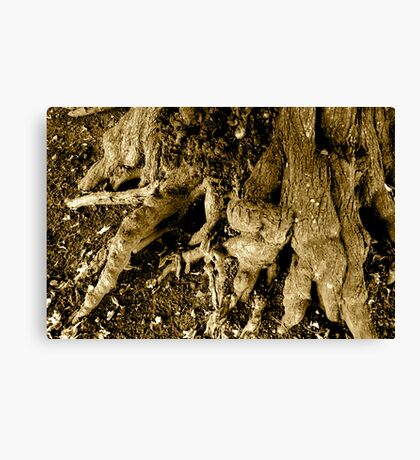 Rooted 2 Canvas Print