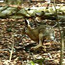 Running Hare by Trevor Kersley