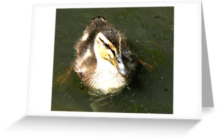 Duckling #1 by Trevor Kersley