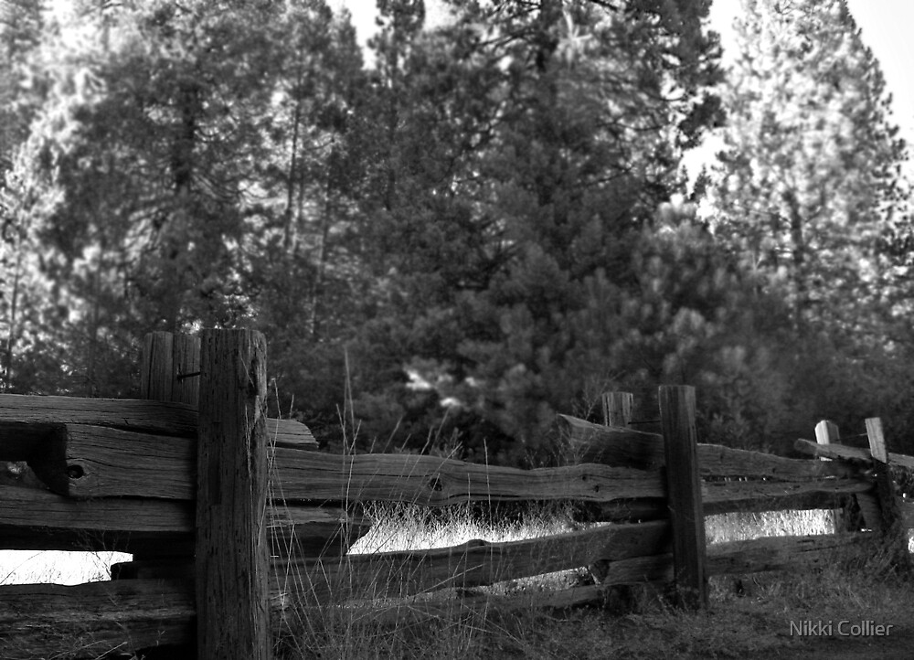 Old wooden Fences by Nikki Collier